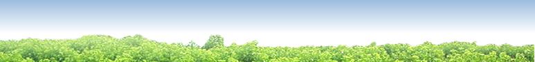 桑の葉の品質にこだわったら、とうとう自社農園を作ってしまいました。